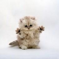 cute_kitty-300x300